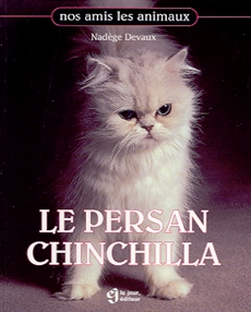 Le Persan Chinchilla