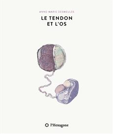 Le tendon et l'os
